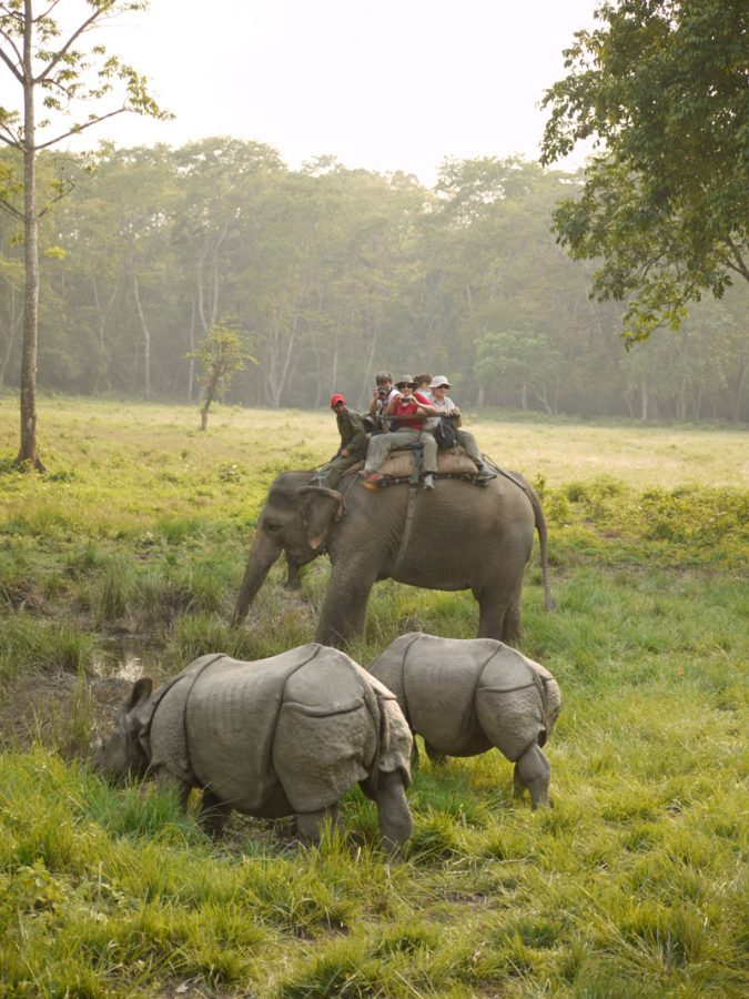 Mother and baby rhino at Chitwan National park, Nepal