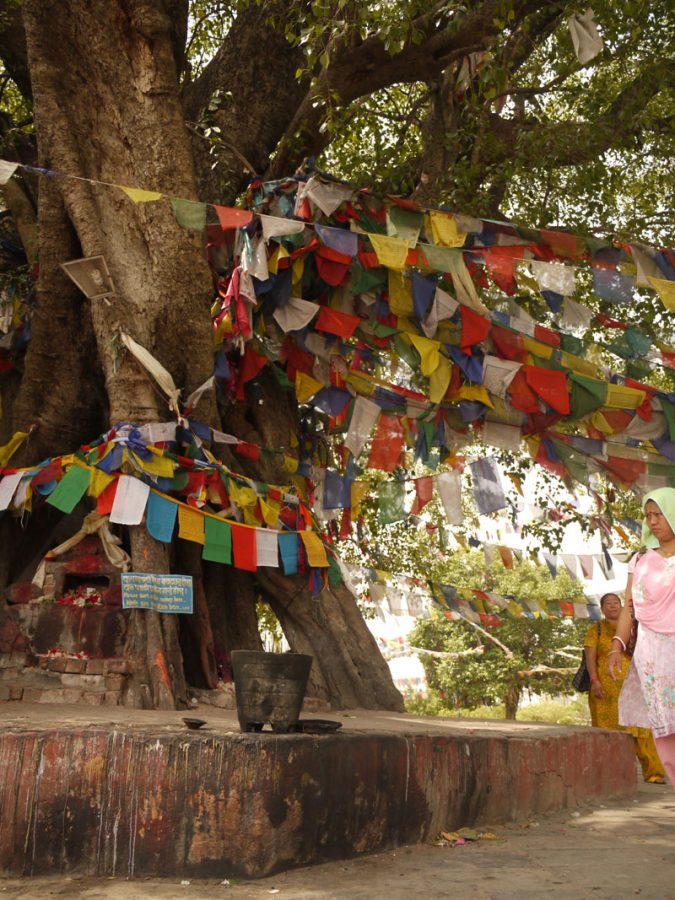 Prayer flags wrapped around a tree next to the sacred pond, Lumbini, Nepal