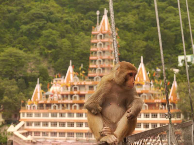 Monkey in front of a hindu temple, Rishikesh