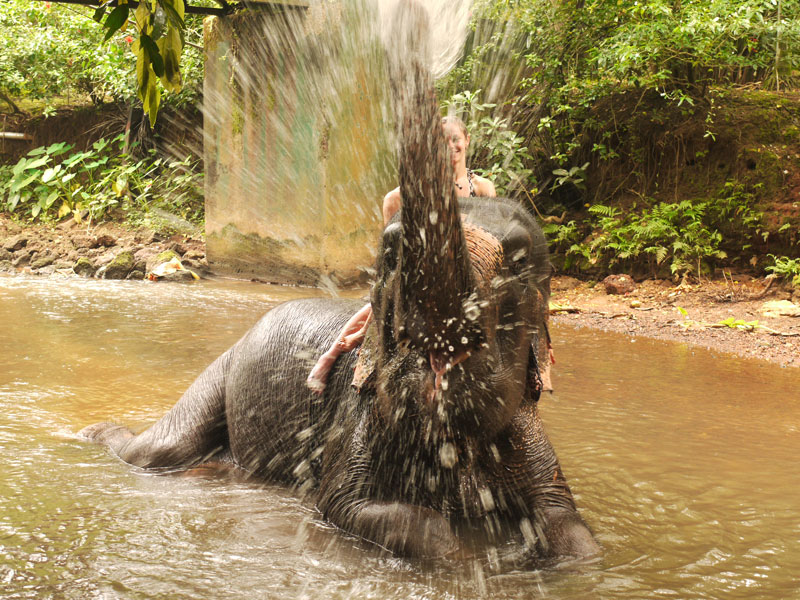 VIDEO Elephant Bath, Goa, India