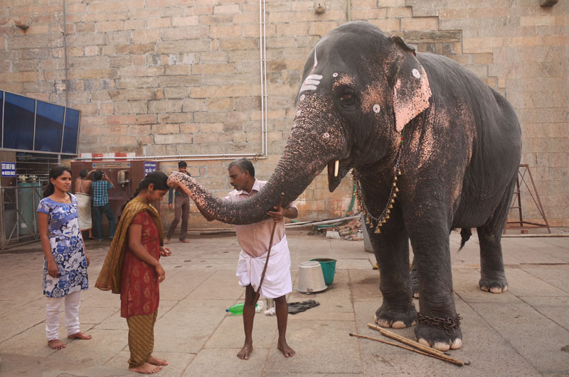 Temple Elephant blessing a local woman, Madurai