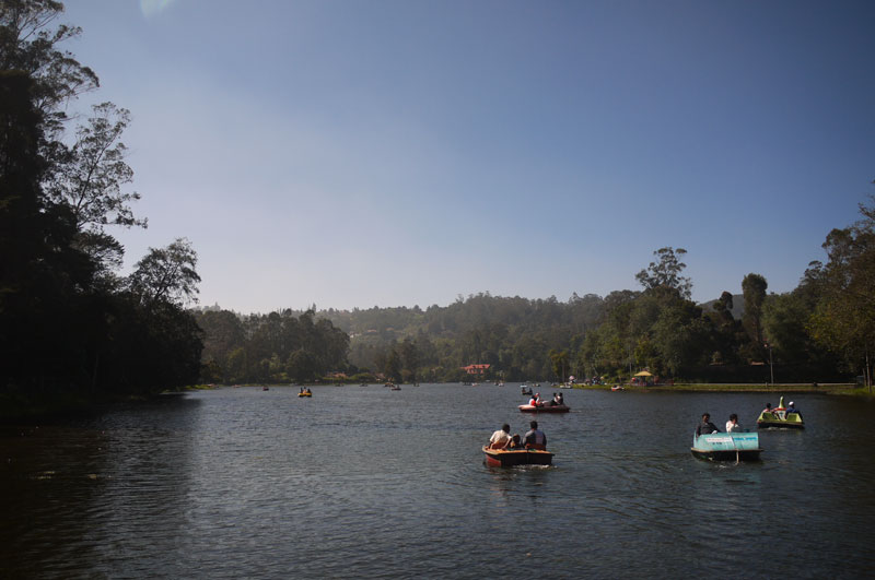 Kodaikanal's famous lake where a carnival atmosphere is in the air, complete with food vendors, donkey rides and giant duck-headed pedalos!