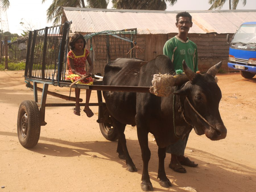 Father and Daughter making there way through Talaimannar on bull-drawn carriage!