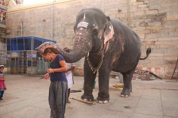 Noelle being blessed by the temple elephant in Madurai, India