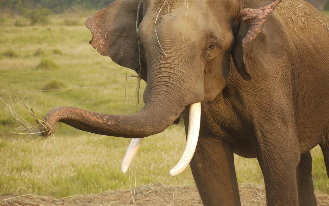 Travel Photo: Elephant in Chitwan National Park, Nepal