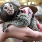 Travel Photo: Pet Monkey in Japan