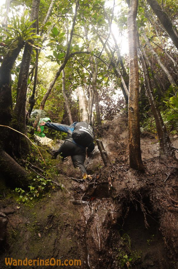 Noelle climbs up the steep path on the Kerinci trail, Sumatra
