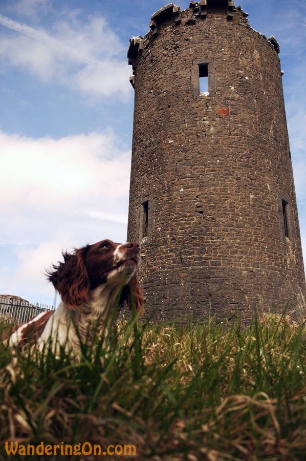 Milly, Noelle's dog, in front of the round tower on the way up the Devil's Bit