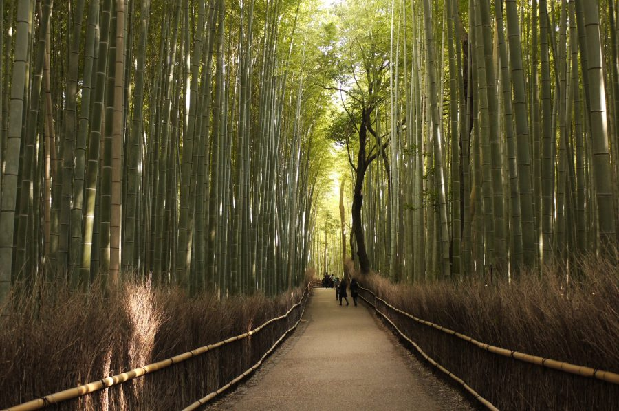 Sagano Bamboo Forest in Arashiyama Kyoto, Arashiyama Bamboo Grove Kyoto, things to do in Kyoto, 2 days in kyoto