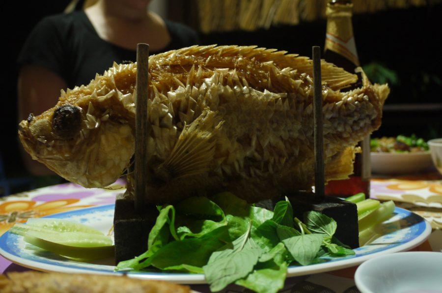 Elephant Fish for dinner!