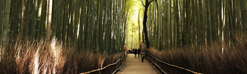 Bamboo Forest, Kyoto, Japan - Wandering On Travel Blog