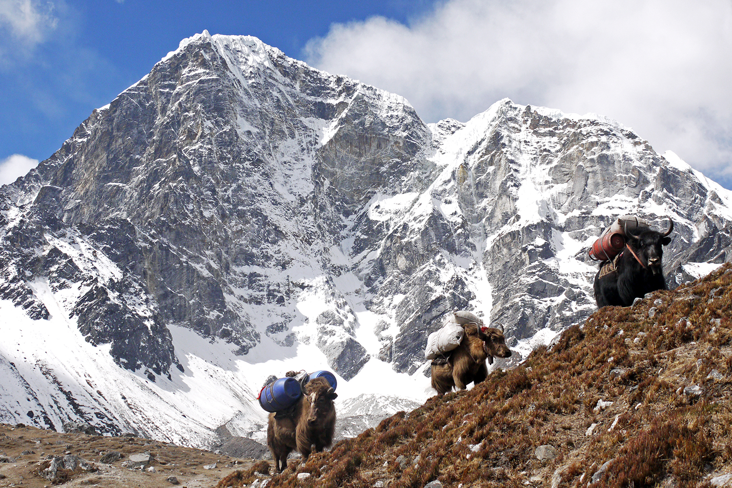 Three yaks stop for a rest en route to Everest Base Camp