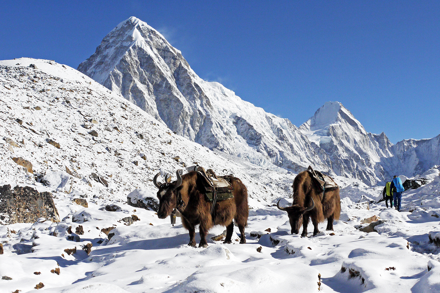Yaks stopping to enjoy the views on the Everest Base Camp Trek