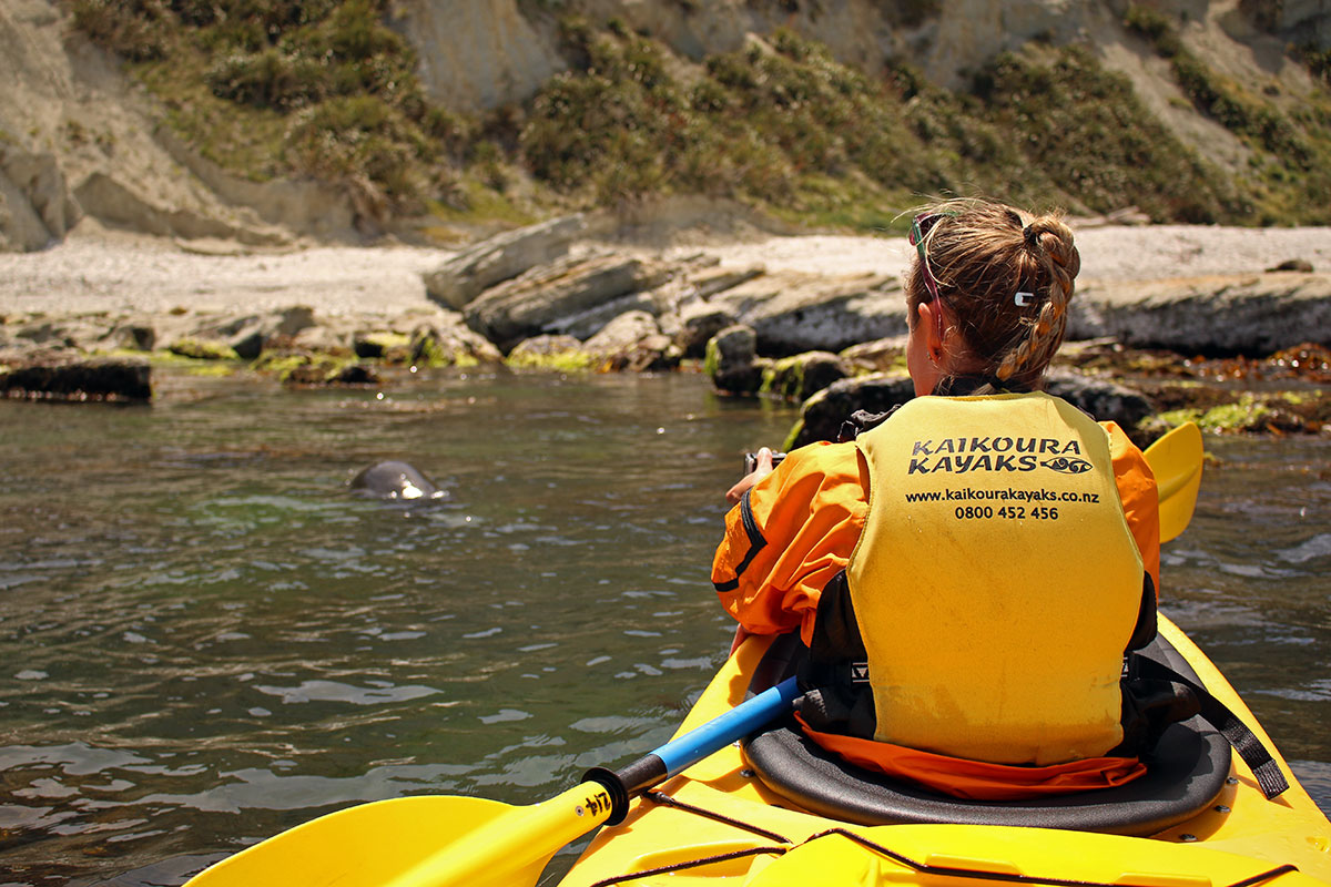 Watching seals while sea-kayaking in Kaikoura