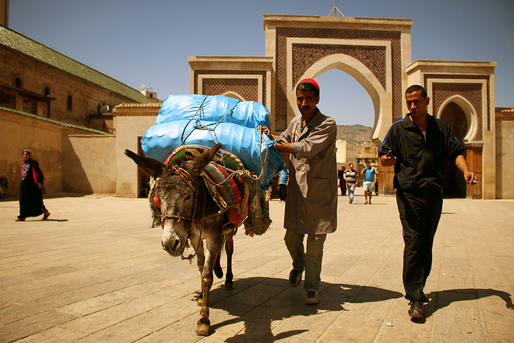 Donkey carrying packs near Bab Rcif (Rcif Gate) in Fez