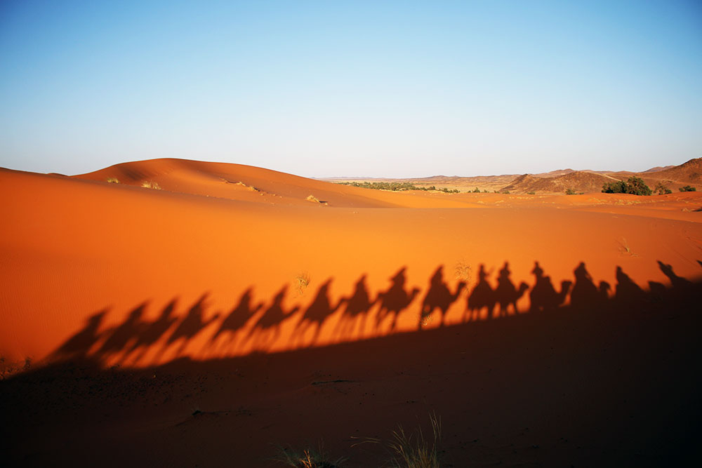 Camel Shadows in the Merzouga Dunes of the Moroccan Sahara.