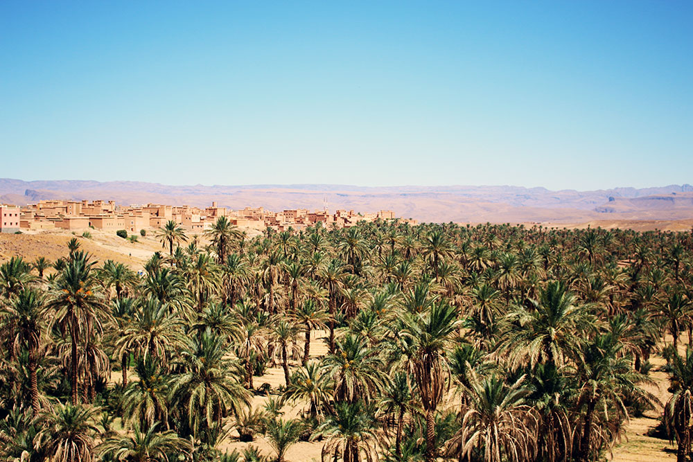 Palm Plantations in Morocco.