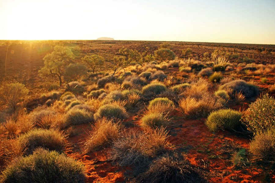 Dawn breaking in the outback