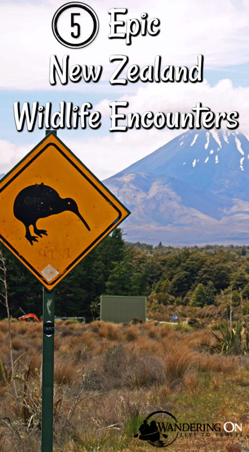 5 Epic New Zealand Wildlife Encounters