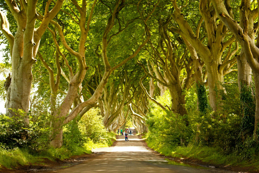 The Dark Hedges King's Road Game Of Thrones filming Locations Northern Ireland