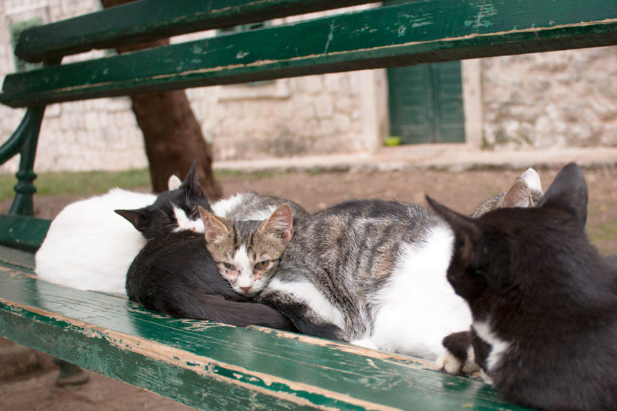 Cats sleeping on a bench in Wood Square | Cats of Kotor